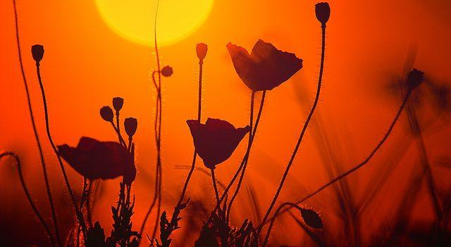 1eeb4a0024468e145f9e5b4d8306c1a1.jpg zoomyboy.com (flickr)