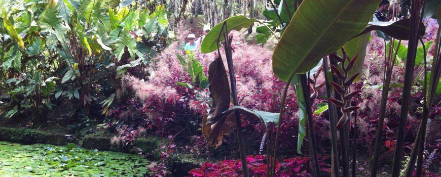 Bot. Garten-Martinique