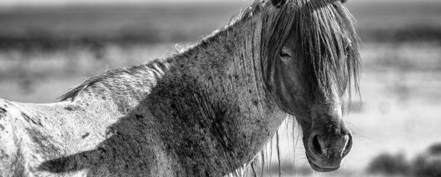 Mustang © Manfred Baumann