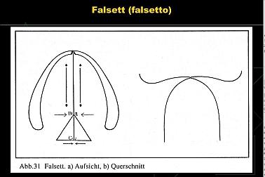 Falsetto_kleiner