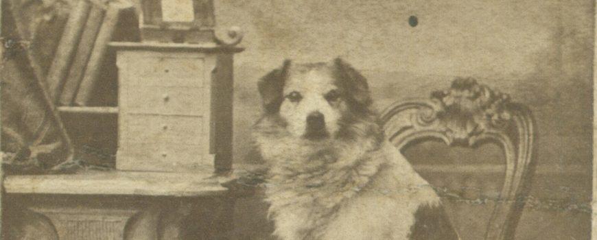 Carl Koppensteiner, Porträt eines Hundes, um 1875 Landesgalerie Linz, Fotomuseum Bad Ischl