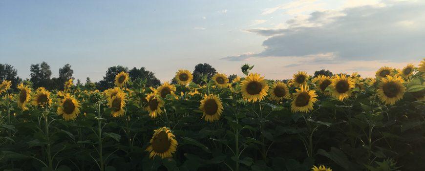 FROzine Summerbreak 19
