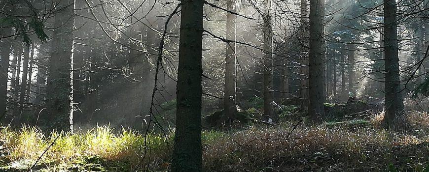 IMG_20191101_112700 Wald in der Morgensonne