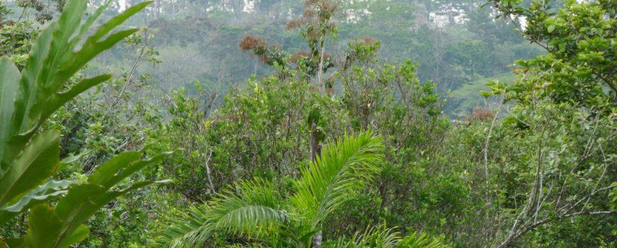 papagei costa rica urwald regenwald