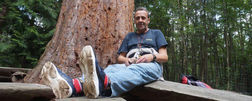 DSC03903 Bei den Mammutbäumen in Paudorf, 10.9.2020