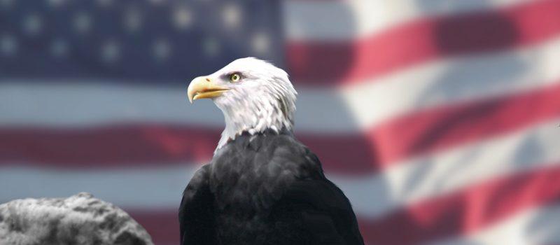 Eagle_and_American_Flag Wikipedia