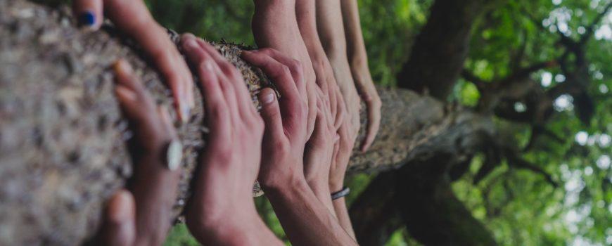 shane-rounce-DNkoNXQti3c-unsplash Tolerance Toleranz Together Zusammen Baum