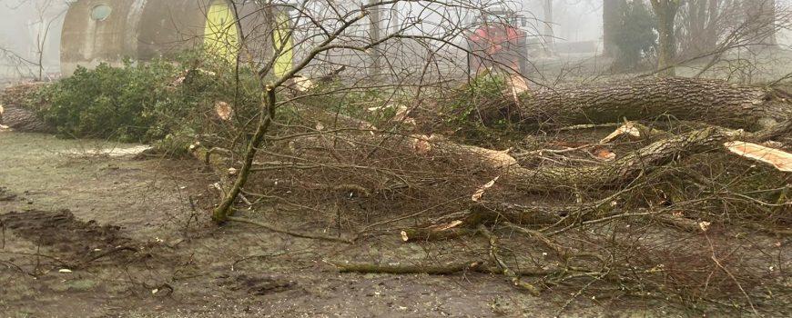 PHOTO-2021-02-26 Baumfällung Rodlgelände