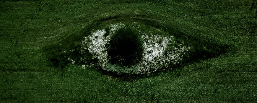 egor-vikhrev-TJ0KagkqA2Y-unsplash Sustainability Nachhaltigkeit Symbolbild