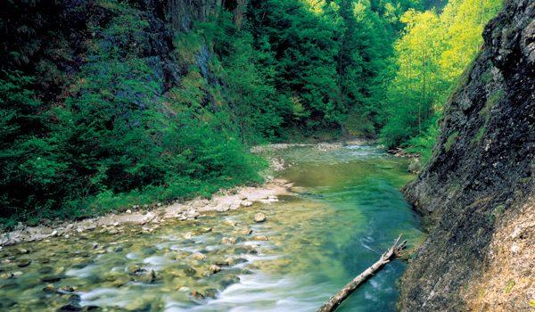 7fb2a29b5851dbc9982b80fcb4aa856d.jpg Pressefoto Nationalpark Kalkalpen